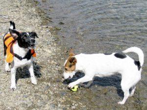 Spiel & Spaß im Urlaub mit Hund - Hundephysiotherapie Attendorn